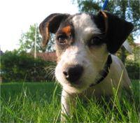 En fil med namnet HundenTess.jpg